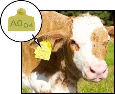 identyfikacja zwierząt rfid uhf