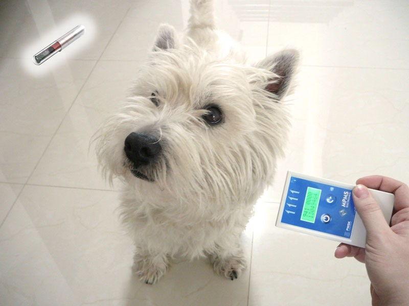Znakowanie RFID zwierząt hodowlanych